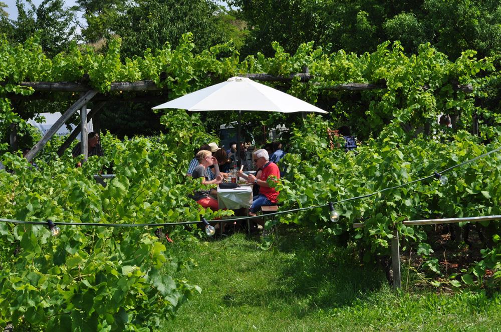 Hofgarten Rosa Gästezimmer Ilbesheim Südliche Weinstrasse Kalmitweinfest 11