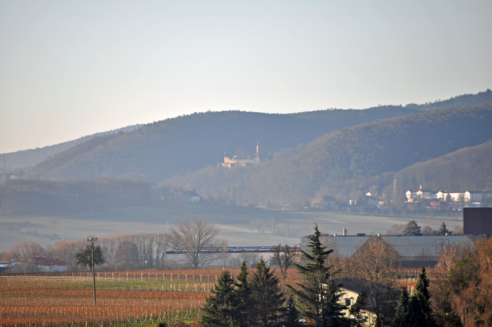 Hofgarten Rosa Ilbesheim